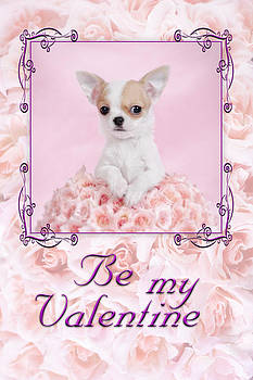 Waldek Dabrowski - Chihuahua Valentine
