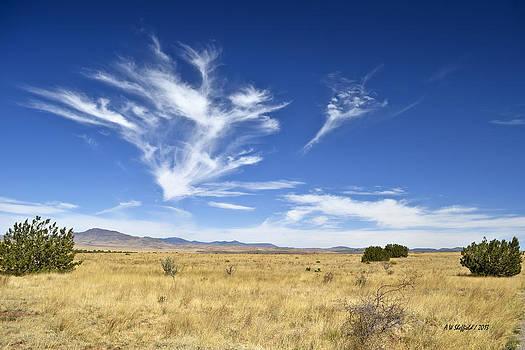 Allen Sheffield - Chihuahuan Desert