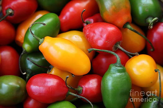 James Brunker - Rocoto Chili Peppers