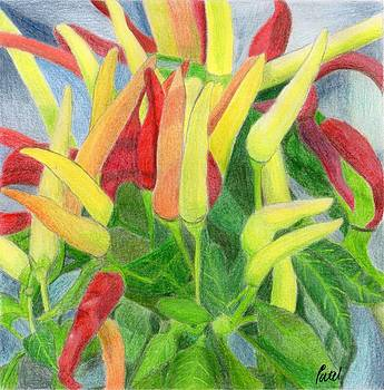 Chillies by Bav Patel