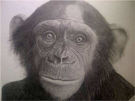 Chimp by Casper Venter