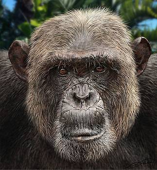 Chimpanzee Male by Owen Bell