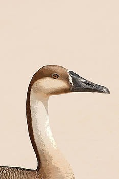 Chinese Swan Goose by Bob and Jan Shriner