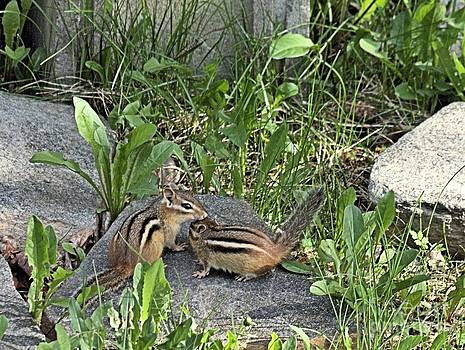 Chipmunk Friends by Andrew Miles