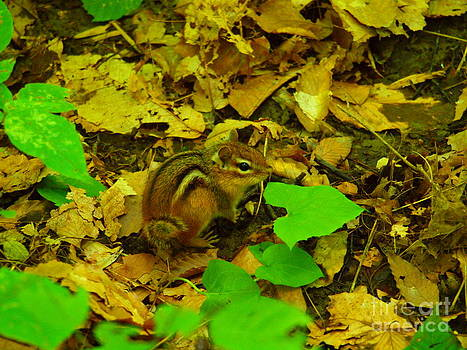 Tammy Bullard - Chipmunk In Sapsucker woods