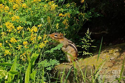 Byron Varvarigos - Chipmunk Sniffing Flowers