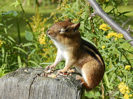 Chipmunk Soaking Up the Sun by Briella Danowski