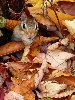 Christine Stack - Chipmunk with Acorn in Autumn