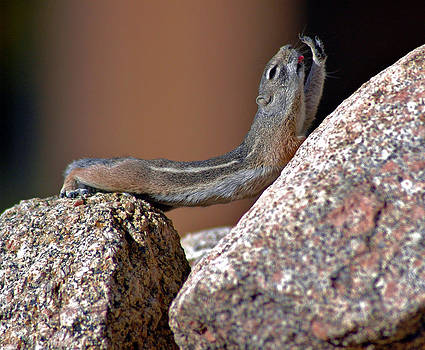 Chipmunk Yoga by Jay Campbell
