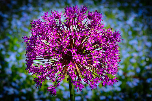Chives by Dheeraj Mallemala