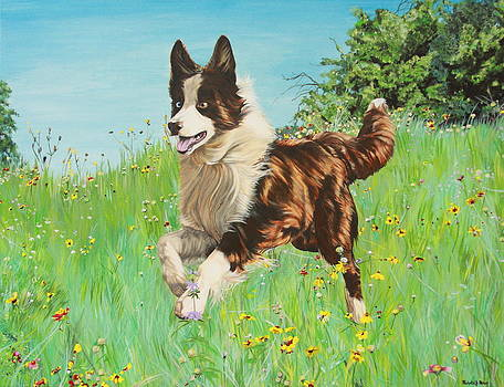 Chocolate Border Collie in Meadow by Michelle Miron-Rebbe
