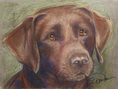 Chocolate Labrador by Sciandra