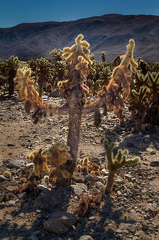 Roger Mullenhour - Cholla Cactus Cross