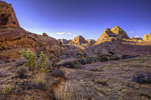 Cholla Cliff by Stephen Campbell