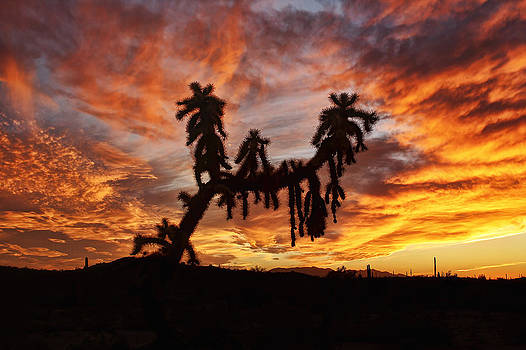 Cholla In Flame by Ryan Seek
