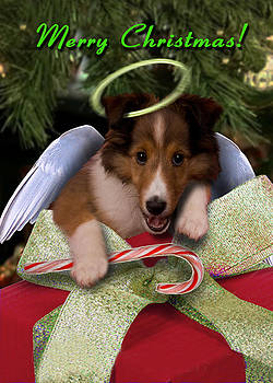 Jeanette K - Christmas Angel Sheltie