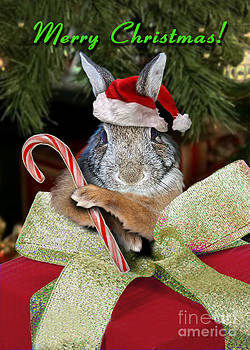 Jeanette K - Christmas Bunny Rabbit
