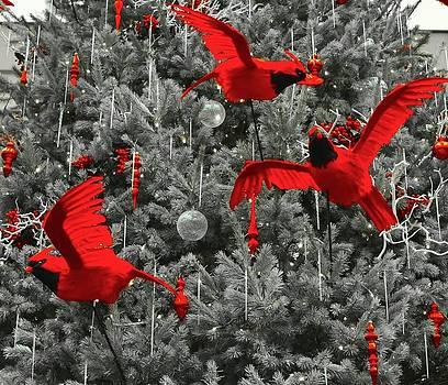 Christmas Cardinals by Wanda J King