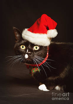 Christmas Cat Portrait by Sharon Dominick