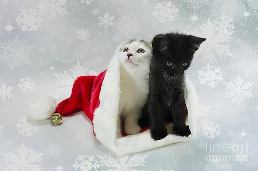 Christmas Kitten by Nicole Markmann Nelson