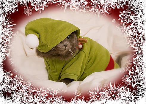 Joann Vitali - Christmas Kitty