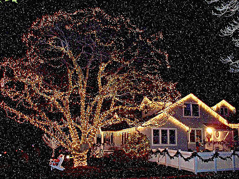 Rick Todaro - Christmas Lights in Snow
