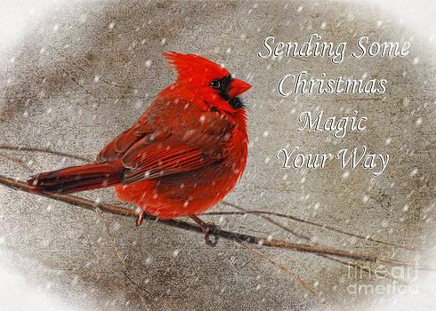 Lois Bryan - Christmas Magic Cardinal Card