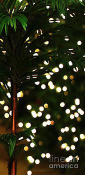Linda Shafer - Christmas Palm