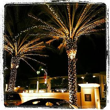 Christmas Palm Trees At The Montage by Minnie L