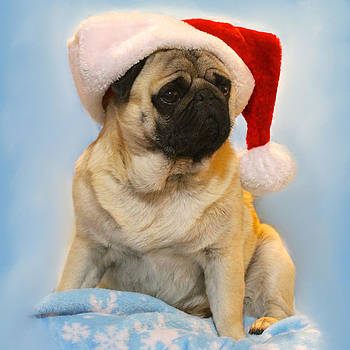 Christmas Pug by Veronica Ventress
