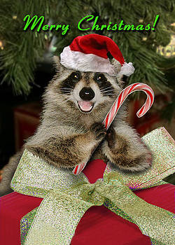 Jeanette K - Christmas Raccoon
