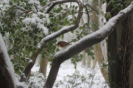 Christmas Robin by Jenny A Jones