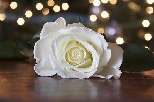 Jennifer Lamanca Kaufman - Christmas Rose