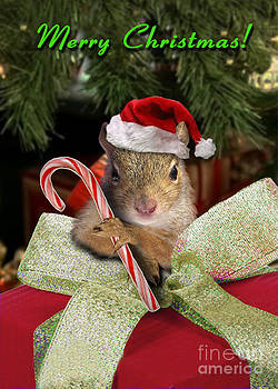 Jeanette K - Christmas Squirrel