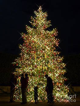 Christine Stack - Christmas Tree Lights at Longwood Gardens in Kennett Square Pennsylvania