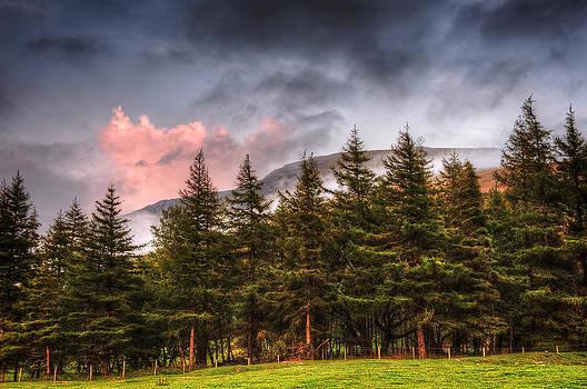 Svetlana Sewell - Christmas Trees in Summer
