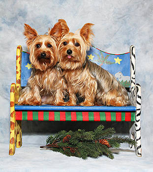 Christmas Yorkie Twins by John Rockwood