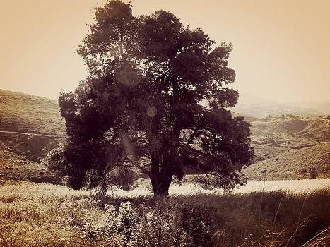 Chromatic Tree by Angela Zafiris