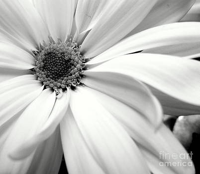 Chrysanthemum In Black And White by Ioanna Papanikolaou