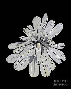 Barbara Griffin - Chrysanthemum Stone 1