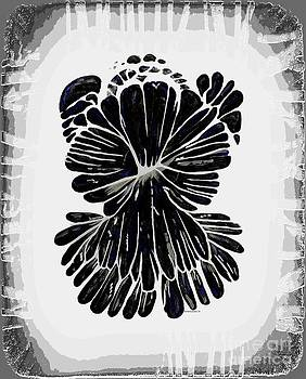 Barbara Griffin - Chrysanthemum Stone B W 2
