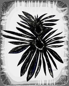 Barbara Griffin - Chrysanthemum Stone B W 3