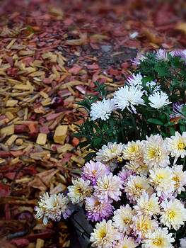 Chrysanthemums in the forest by Ioana Ciurariu