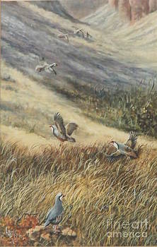 Chukars In Flight by Lynne Parker
