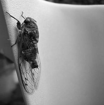 Gilbert Photography And Art - Cicada