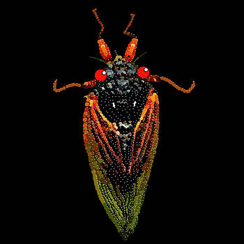 Cicada in Black by R  Allen Swezey
