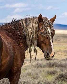 Nadja Rider - Cimarron - Wild Mustang Stallion