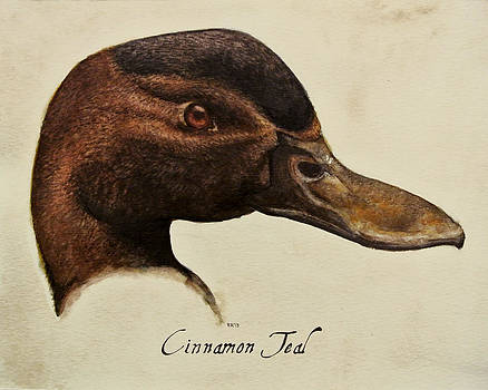 Cinnamon Teal by Rachel Root