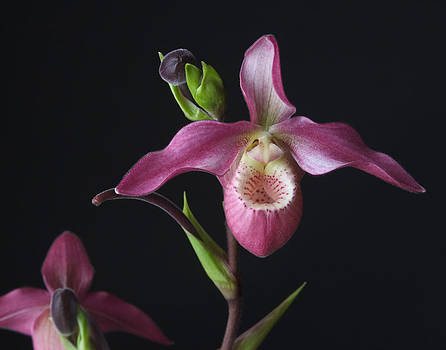 Circle of Life Orchid by Randy Grosse