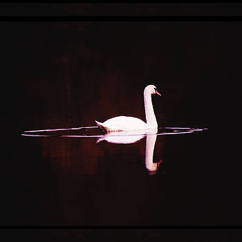 Joe  Connors - Swan in silhouette reflection.